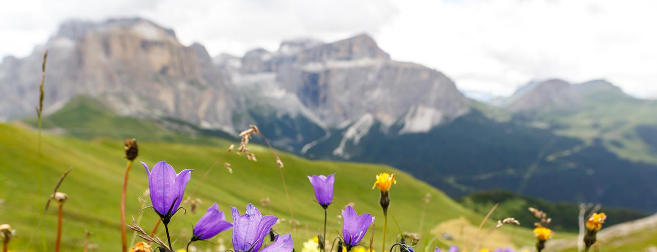 Close-up of mountain flowers with mountains in the background